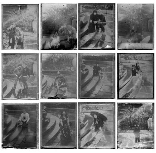 ContactSheet-Mutts