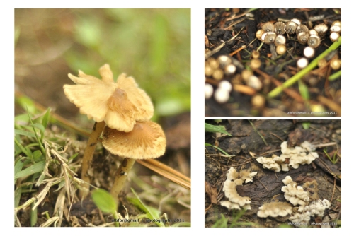 WP-Aug-28,-2011-Storm-&-Mushroom-3-Board-2