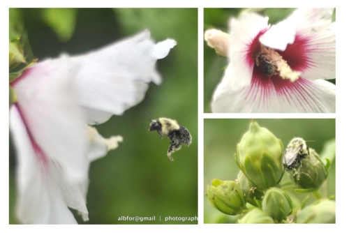 Aug 28, 2011-Storm-&-Mushroom-3-Board Bumble Bees