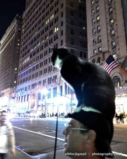 Cat-with-Man,-7th-avenue-3774-upload
