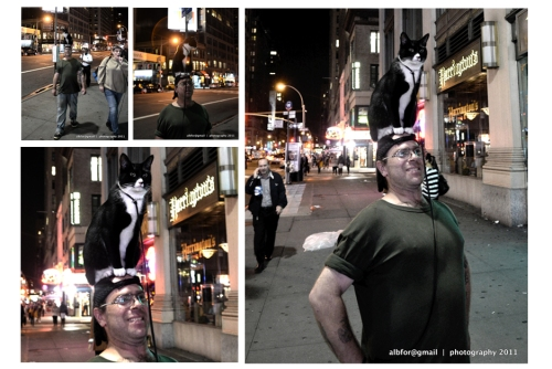 Sep-29,-2011-WP_-nyc,-7th-avenue-cat