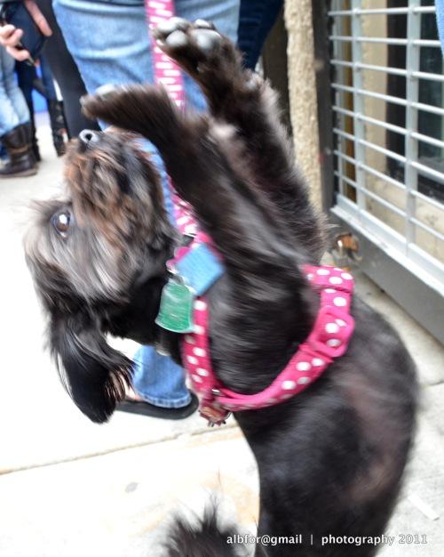 Doggie, Maggie Lynn DSC_4760