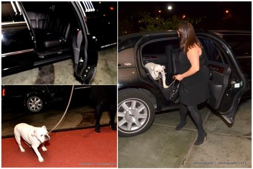 Oct 15, 2011 -Bad-Dog-Gala-Tri-board-a  Sherman arrives