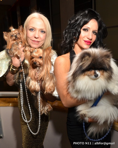 Nov 18, 2011 PSPCA Fashion Show  Grace Forster (Yorkishires Portia & Rosie) & Ashley Speraza
