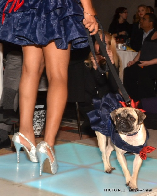 Nov 18, 2011 PSPCA Fashion -Show DSC_1350