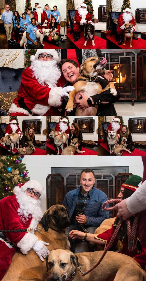 Dec-2,-2017-Santa-Paws@-Kimpton-Hotel-Palomar-#1-UPLOAD